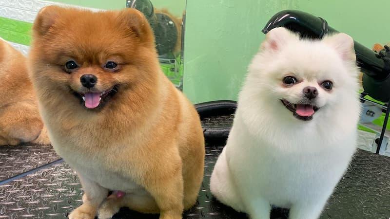 Youpi Pet Beauty Salon